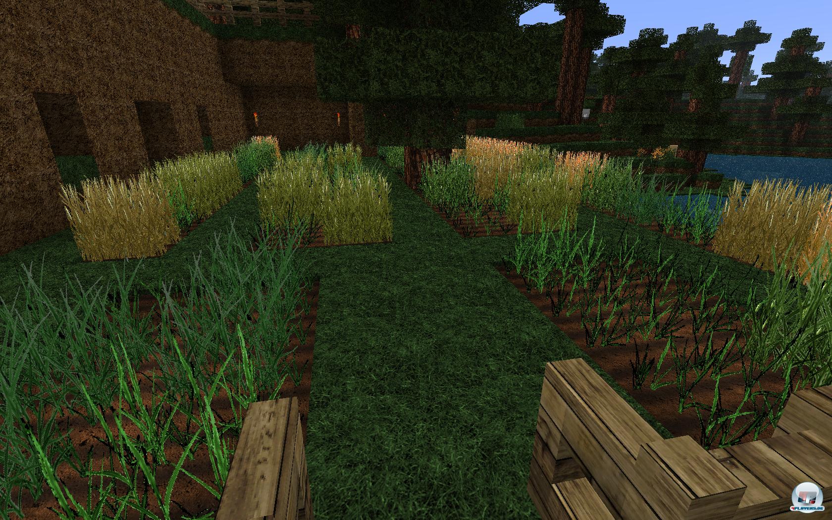 Solch g�ldener Weizen lockt Bauer und Vieh gleicherma�en.